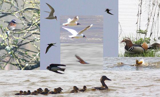 080503 oiseaux de printemps r