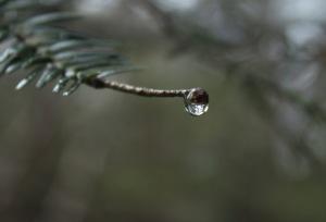 larme (2)